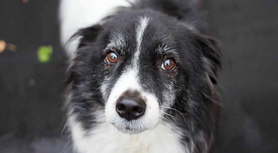 Melanie | Hond adopteren: mijn verhaal