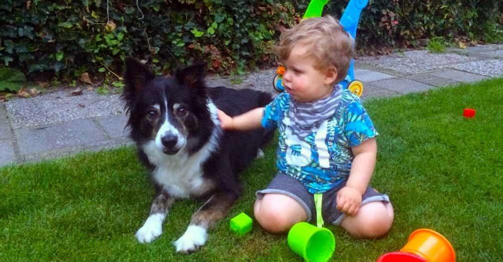 Hond en Dreumes| Samen spelen