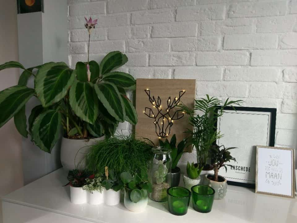 De mini Urban Jungle van Annemarel – Planten in huis