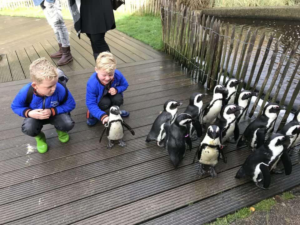 Aquazoo Friesland: erop uit in de herfstvakantie